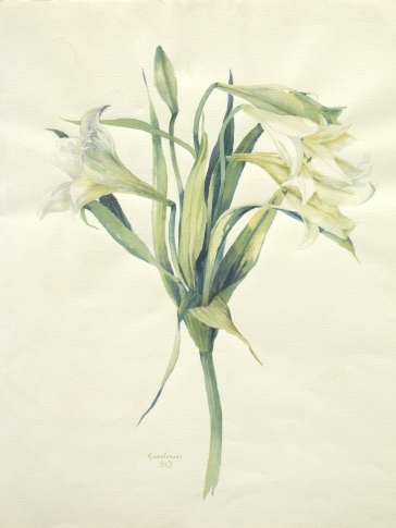 Die Weiße Lilie