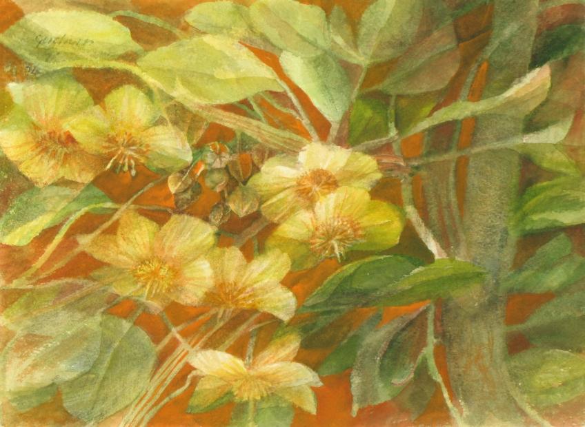 Blüten von Kiwis 2004